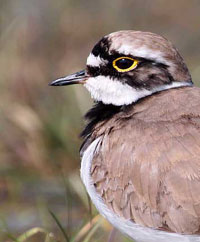 Click to view Waders Gallery